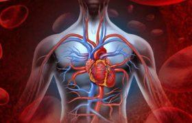 Натуральные средства для укрепления стенок кровеносных сосудов