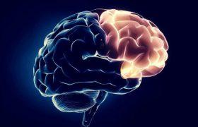 Неврологи нашли неожиданный способ омоложения мозга