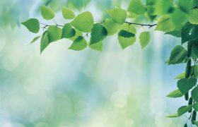 У жителей зеленых районов ниже риск инсультов