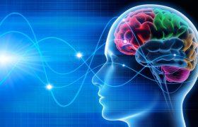 Секрет активности: что нужно вашему мозгу