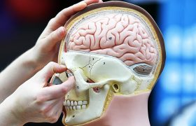Ученые перечислили способы замедлить старение мозга