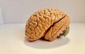 5 факторов, уменьшающих размер мозга