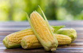 Снизит риск инсульта и диабета: чем полезна кукуруза