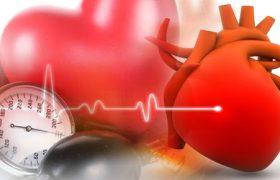 Жир оказался важнее для здоровья сердца, чем мышцы