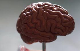 Кетоны помогают защитить мозг людей с ожирением